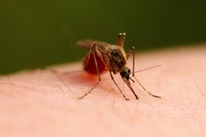 do not blame zika