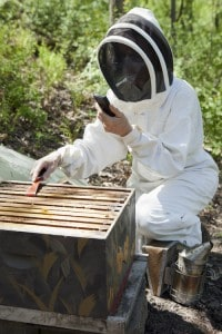 EMF killing bees