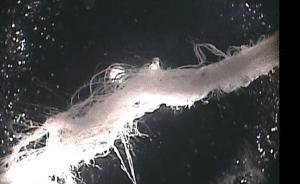 chemweb fiber 2