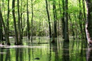 trump cabinet picks swamp