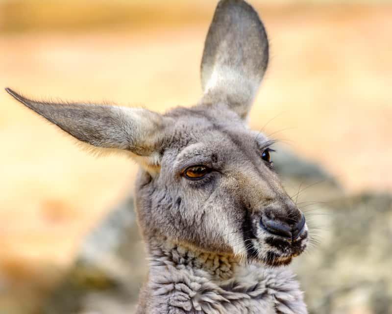 freedom-of-the-press-kangaroo-court