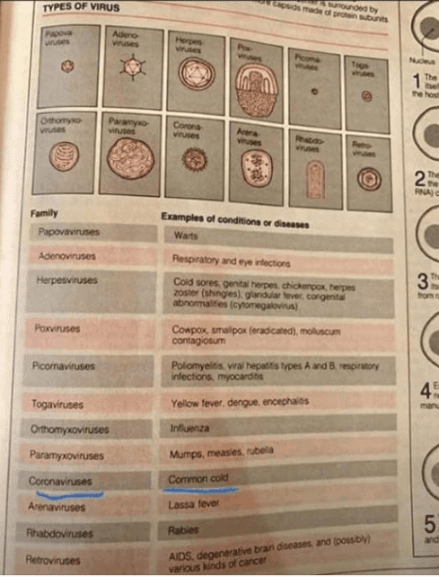 coronavirus common cold